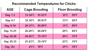 temperature-for-chicks